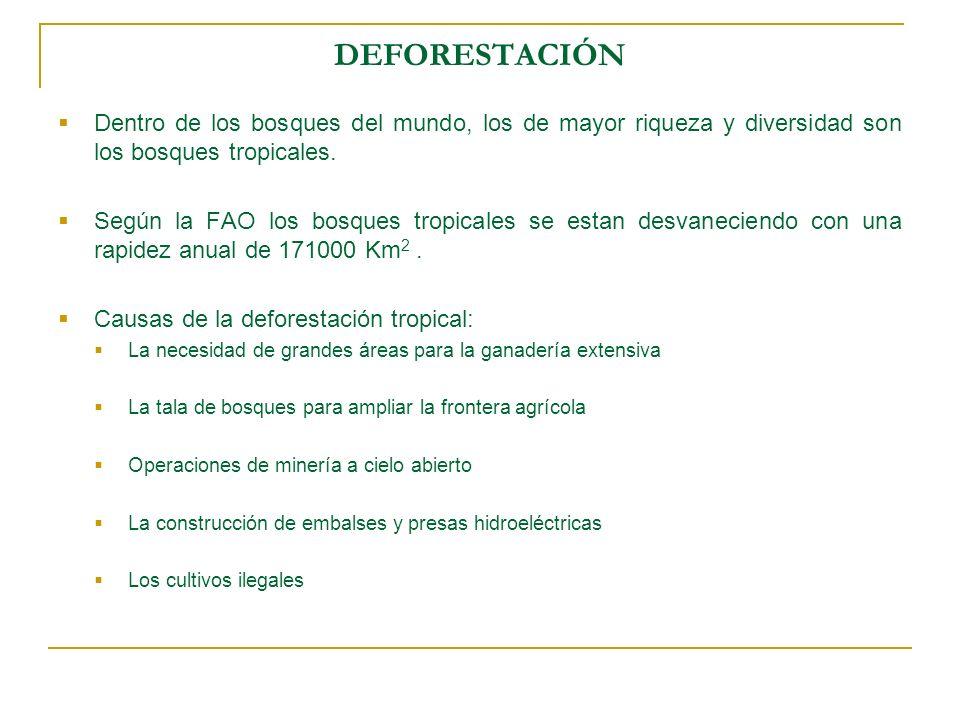 DEFORESTACIÓN Dentro de los bosques del mundo, los de mayor riqueza y diversidad son los bosques tropicales.