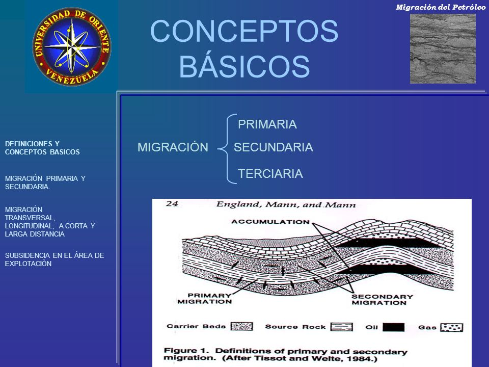 CONCEPTOS BÁSICOS PRIMARIA MIGRACIÓN SECUNDARIA TERCIARIA