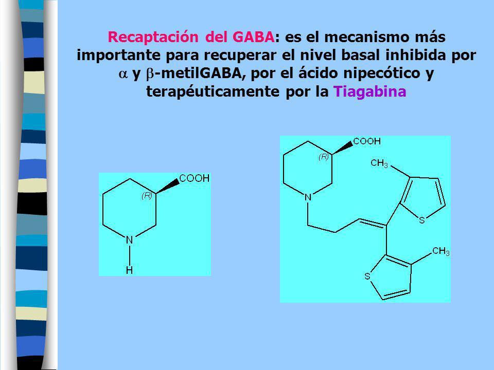 Recaptación del GABA: es el mecanismo más