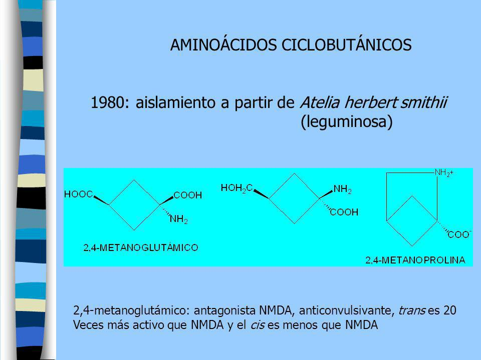 AMINOÁCIDOS CICLOBUTÁNICOS