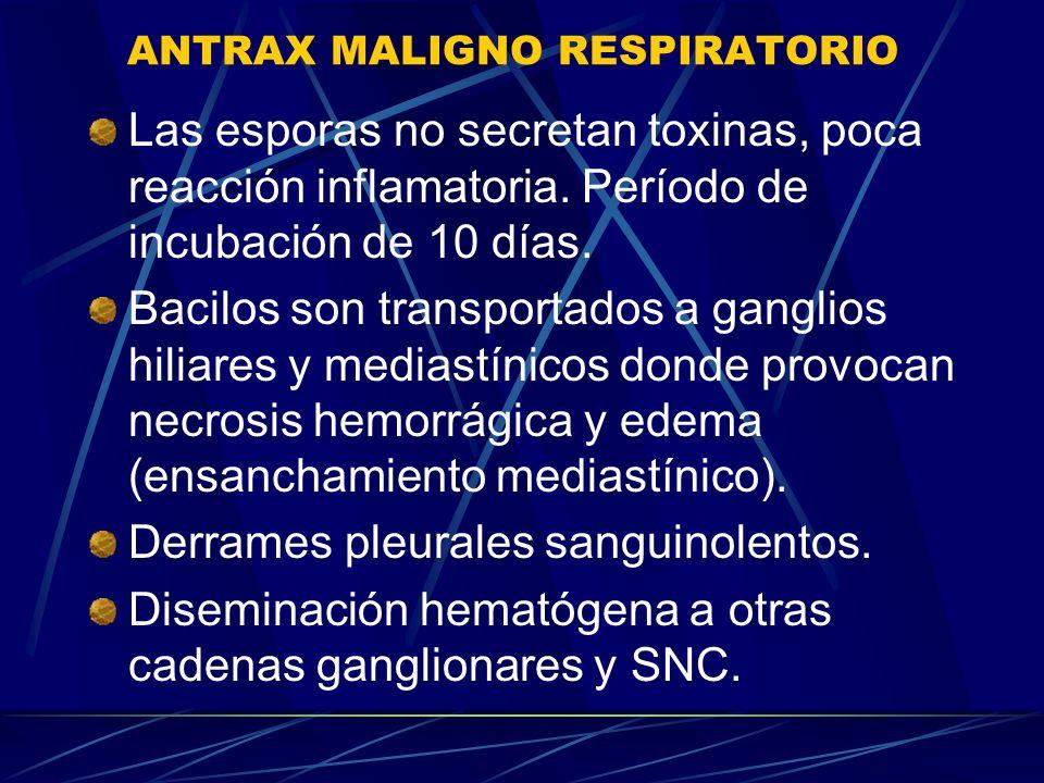 ANTRAX MALIGNO RESPIRATORIO