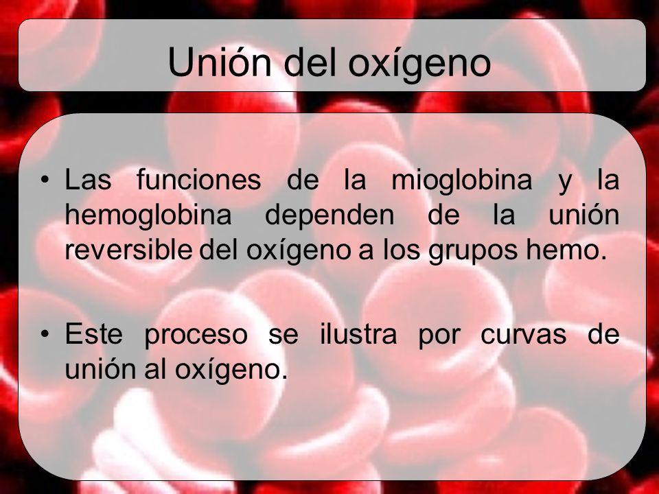 Unión del oxígeno Las funciones de la mioglobina y la hemoglobina dependen de la unión reversible del oxígeno a los grupos hemo.