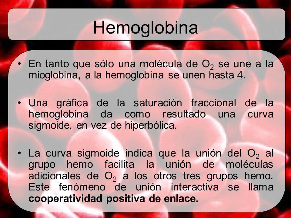 Hemoglobina En tanto que sólo una molécula de O2 se une a la mioglobina, a la hemoglobina se unen hasta 4.