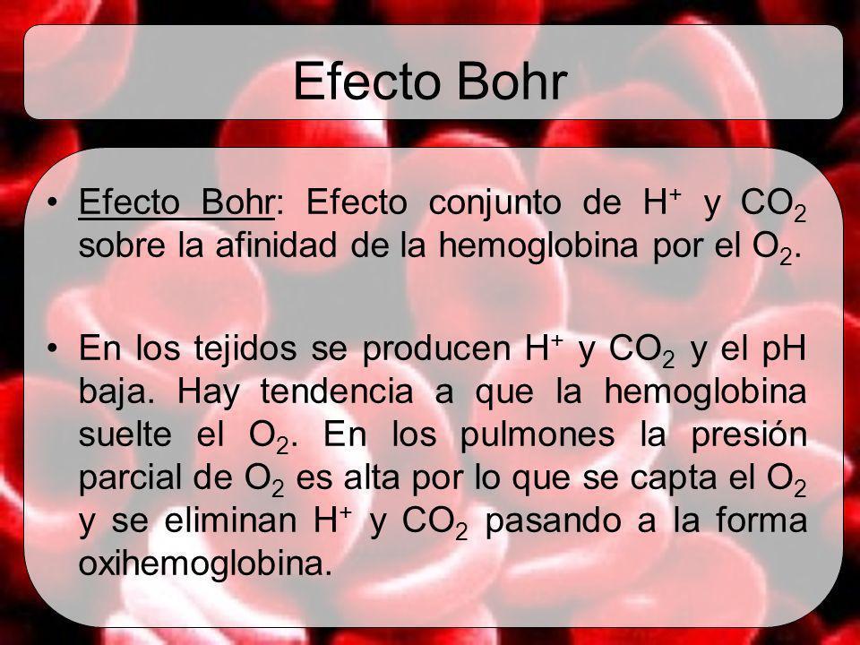 Efecto Bohr Efecto Bohr: Efecto conjunto de H+ y CO2 sobre la afinidad de la hemoglobina por el O2.