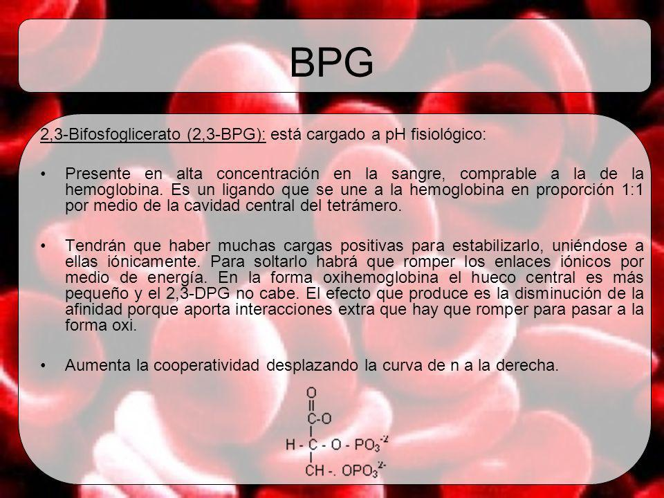 BPG 2,3-Bifosfoglicerato (2,3-BPG): está cargado a pH fisiológico: