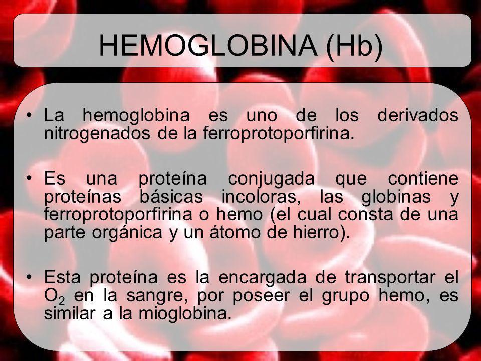 HEMOGLOBINA (Hb) La hemoglobina es uno de los derivados nitrogenados de la ferroprotoporfirina.