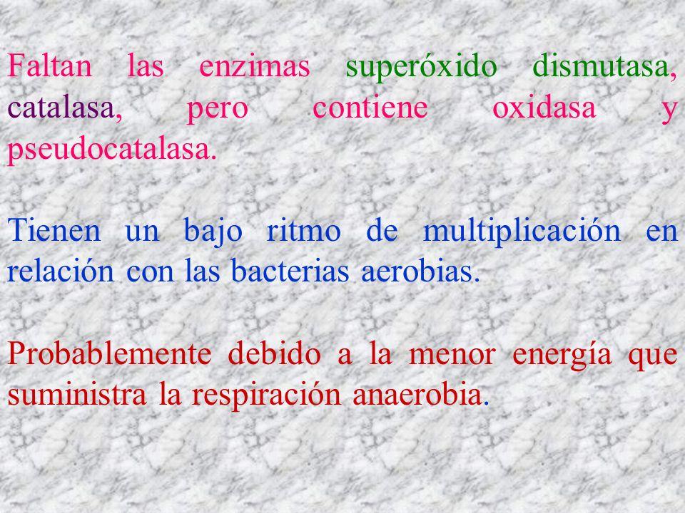 Faltan las enzimas superóxido dismutasa, catalasa, pero contiene oxidasa y pseudocatalasa.