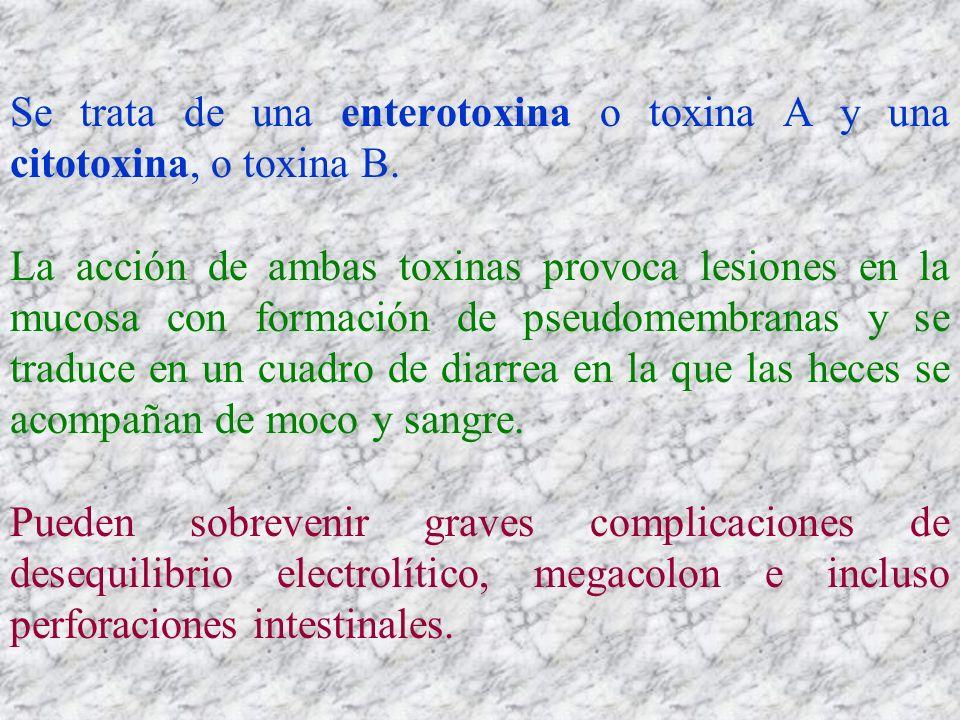 Se trata de una enterotoxina o toxina A y una citotoxina, o toxina B.