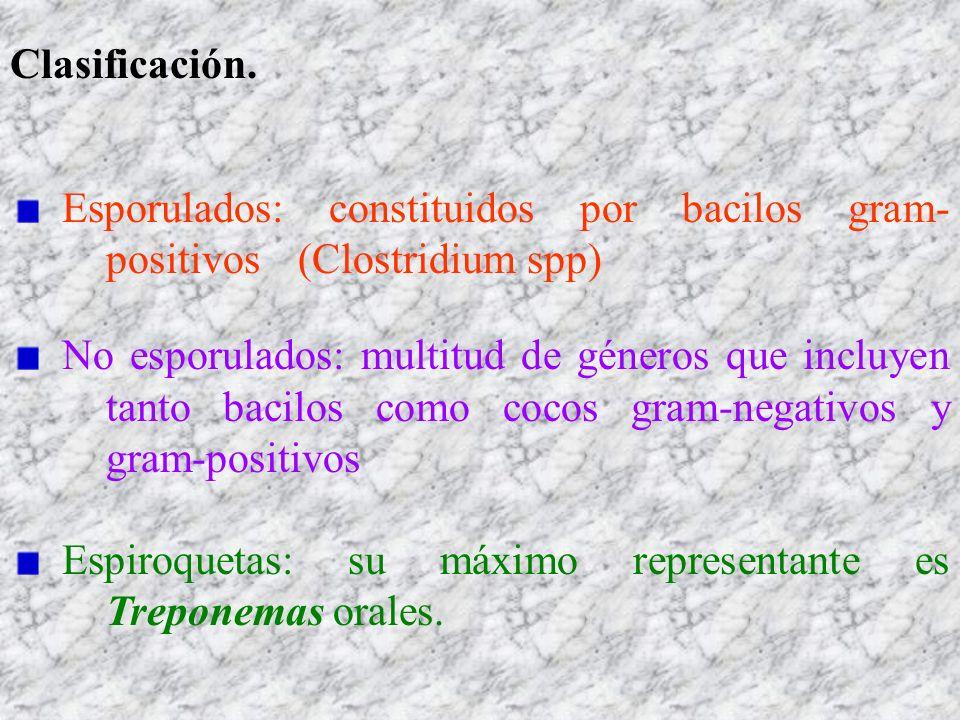 Clasificación. Esporulados: constituidos por bacilos gram- positivos (Clostridium spp)