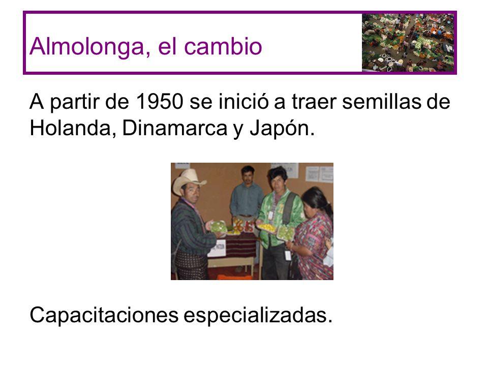 Almolonga, el cambio A partir de 1950 se inició a traer semillas de Holanda, Dinamarca y Japón.