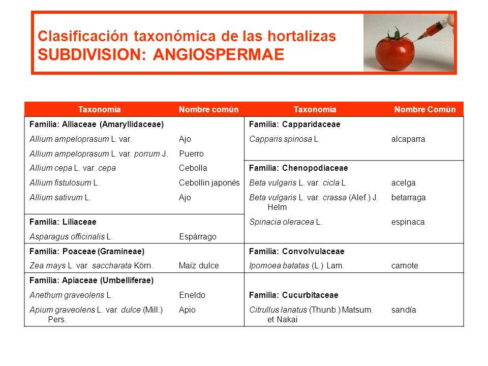 Clasificación taxonómica de las hortalizas SUBDIVISION: ANGIOSPERMAE