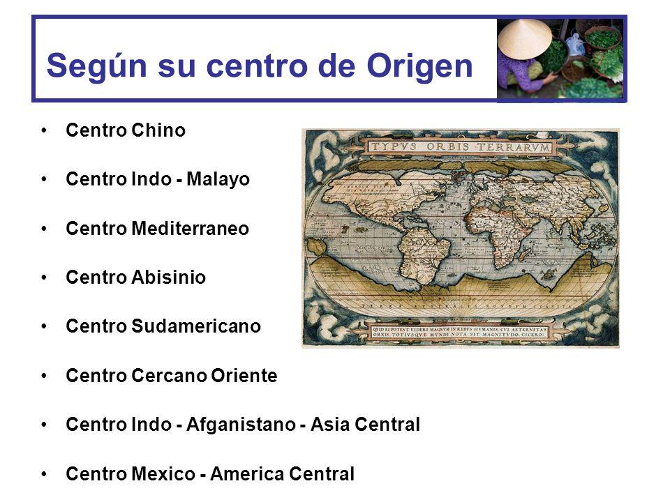 Según su centro de Origen
