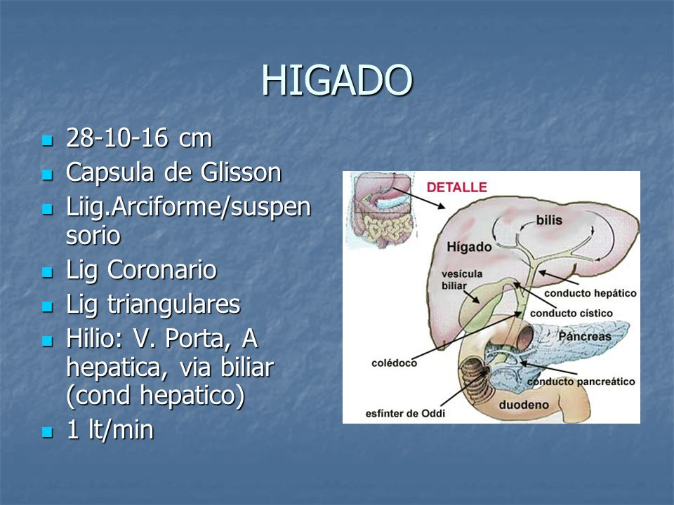 HIGADO 28-10-16 cm Capsula de Glisson Liig.Arciforme/suspensorio