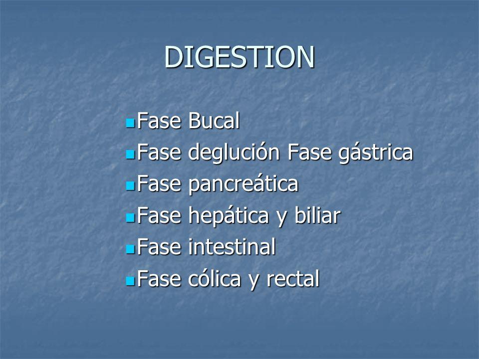 DIGESTION Fase Bucal Fase deglución Fase gástrica Fase pancreática