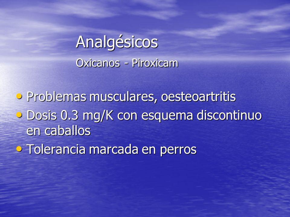 Analgésicos Oxicanos - Piroxicam