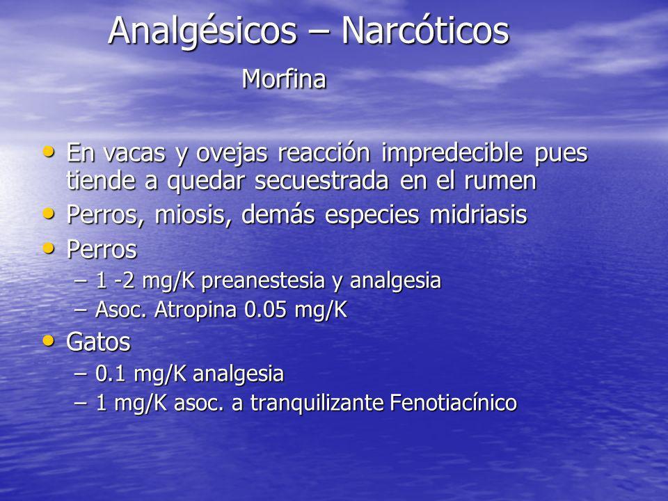 Analgésicos – Narcóticos Morfina