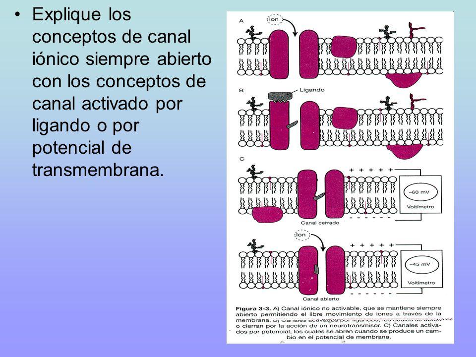 Explique los conceptos de canal iónico siempre abierto con los conceptos de canal activado por ligando o por potencial de transmembrana.