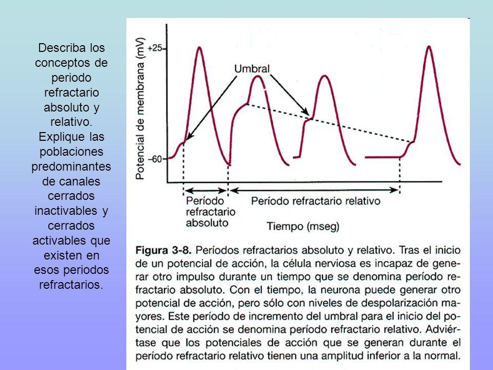 Describa los conceptos de periodo refractario absoluto y relativo