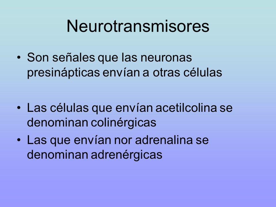 Neurotransmisores Son señales que las neuronas presinápticas envían a otras células. Las células que envían acetilcolina se denominan colinérgicas.