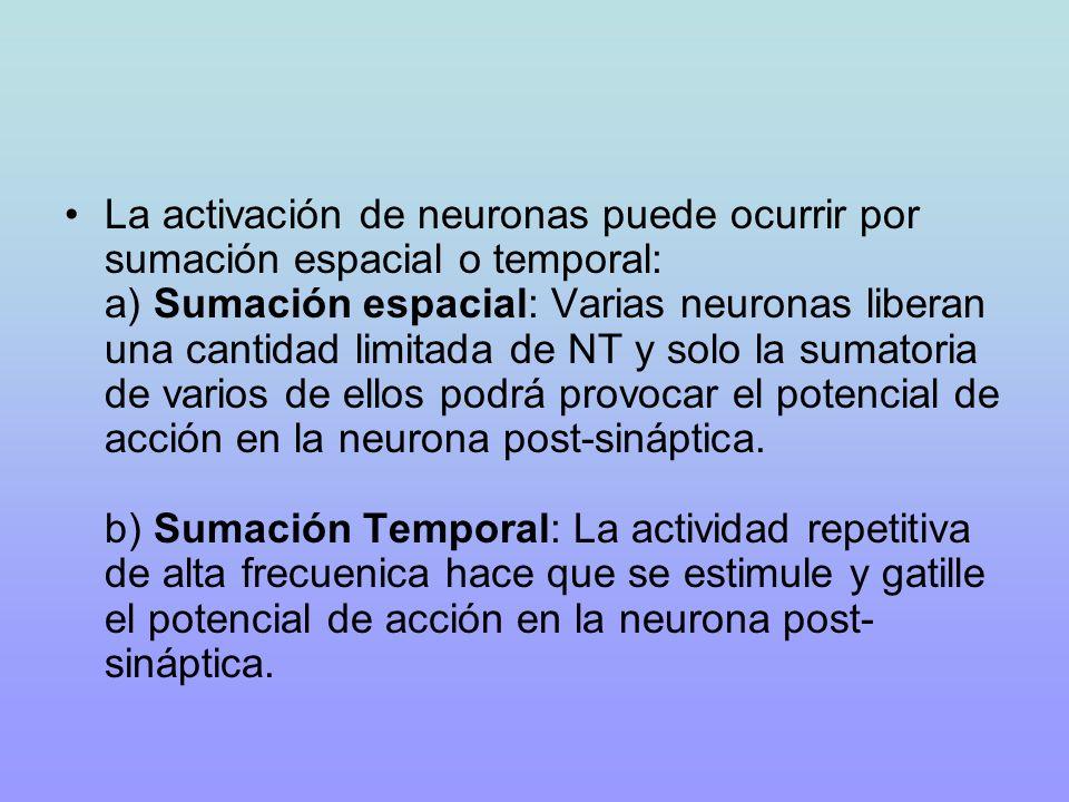 La activación de neuronas puede ocurrir por sumación espacial o temporal: a) Sumación espacial: Varias neuronas liberan una cantidad limitada de NT y solo la sumatoria de varios de ellos podrá provocar el potencial de acción en la neurona post-sináptica.