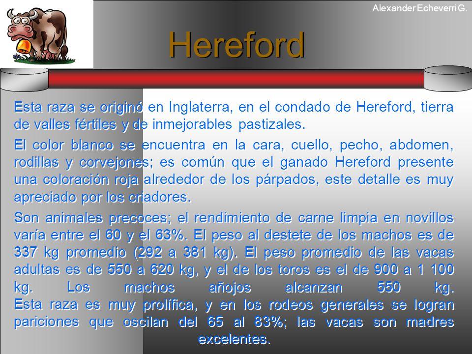 HerefordEsta raza se originó en Inglaterra, en el condado de Hereford, tierra de valles fértiles y de inmejorables pastizales.