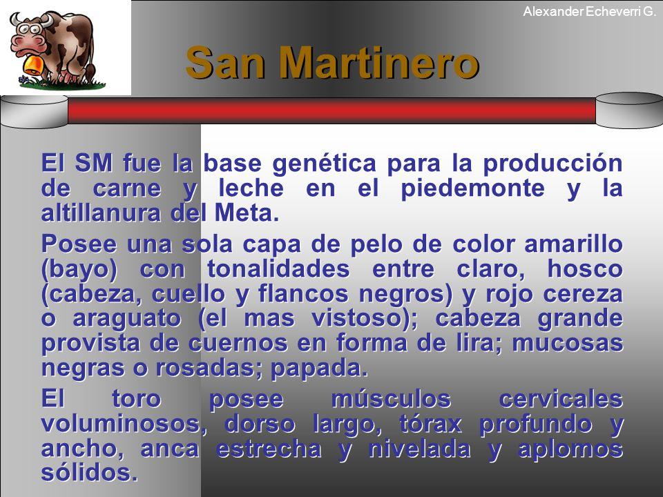 San MartineroEl SM fue la base genética para la producción de carne y leche en el piedemonte y la altillanura del Meta.