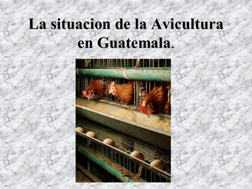 La situacion de la Avicultura en Guatemala.
