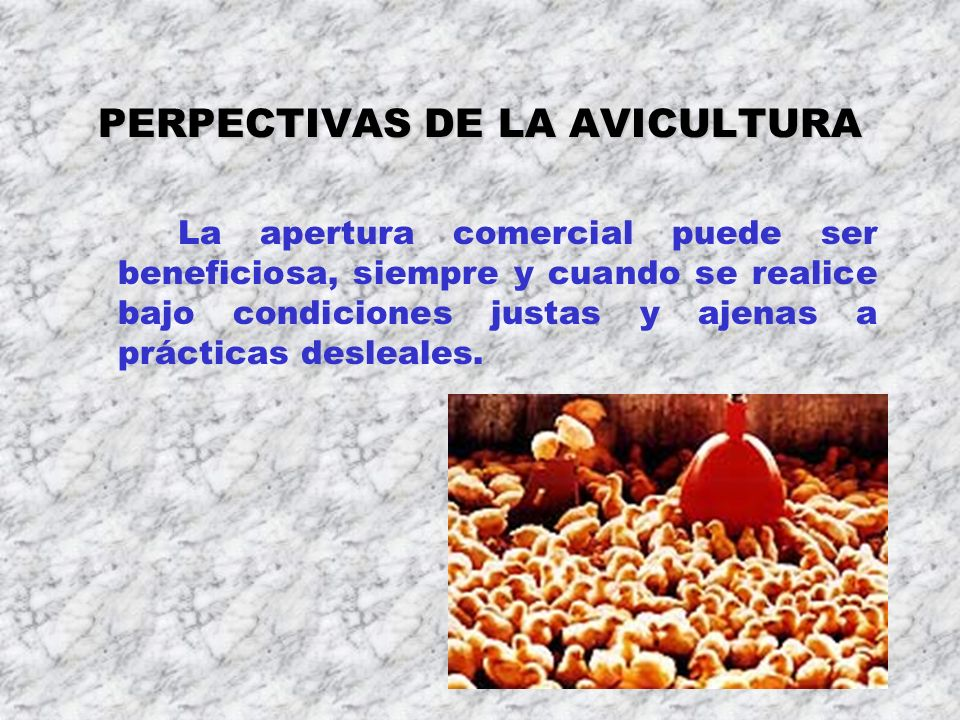 PERPECTIVAS DE LA AVICULTURA