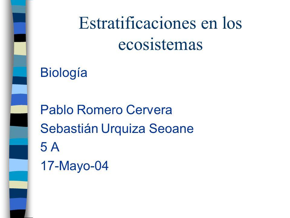 Estratificaciones en los ecosistemas
