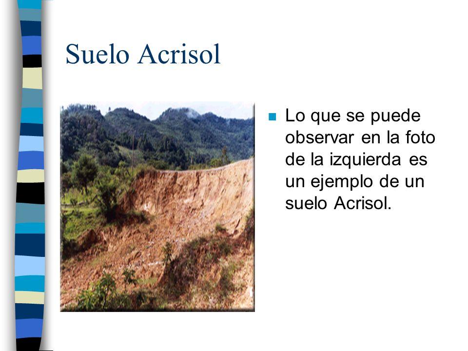 Suelo AcrisolLo que se puede observar en la foto de la izquierda es un ejemplo de un suelo Acrisol.