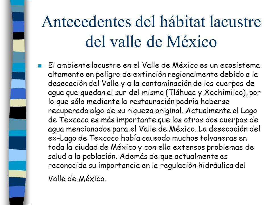 Antecedentes del hábitat lacustre del valle de México