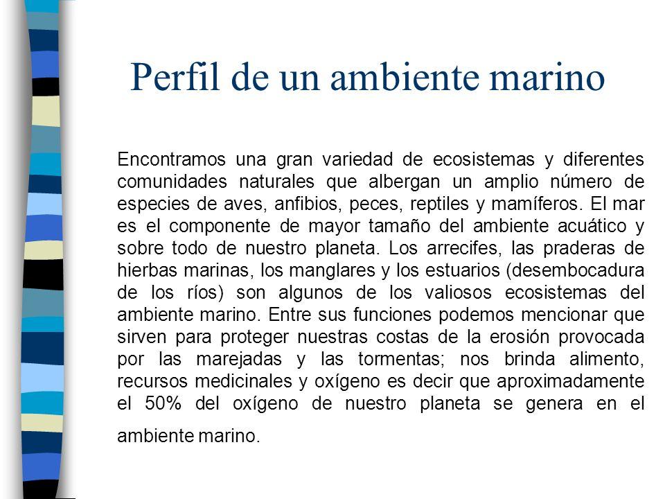 Perfil de un ambiente marino