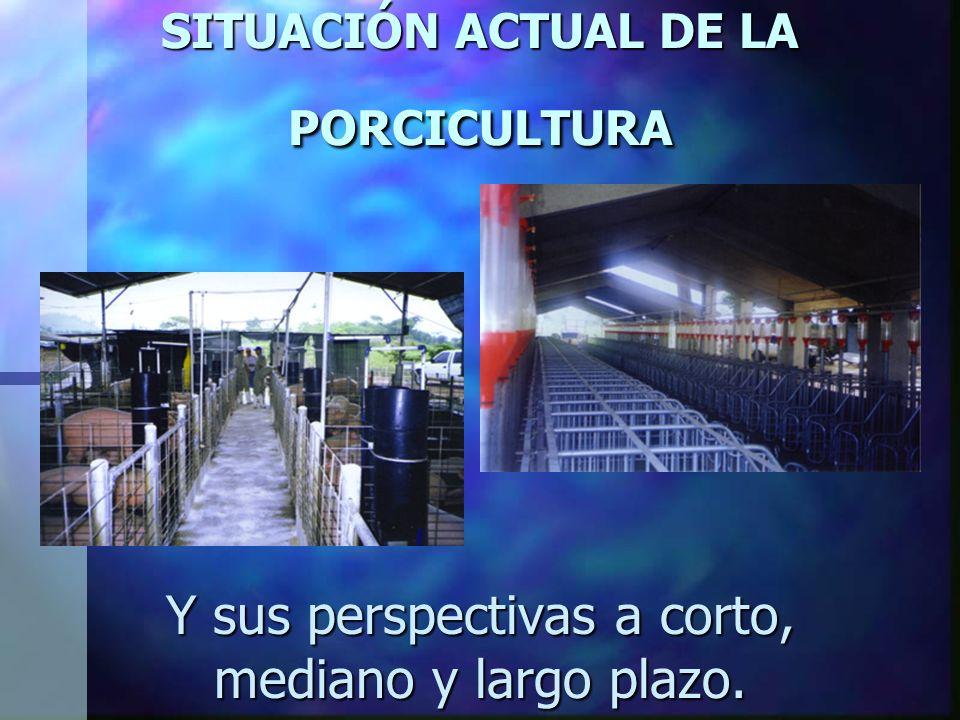 SITUACIÓN ACTUAL DE LA PORCICULTURA