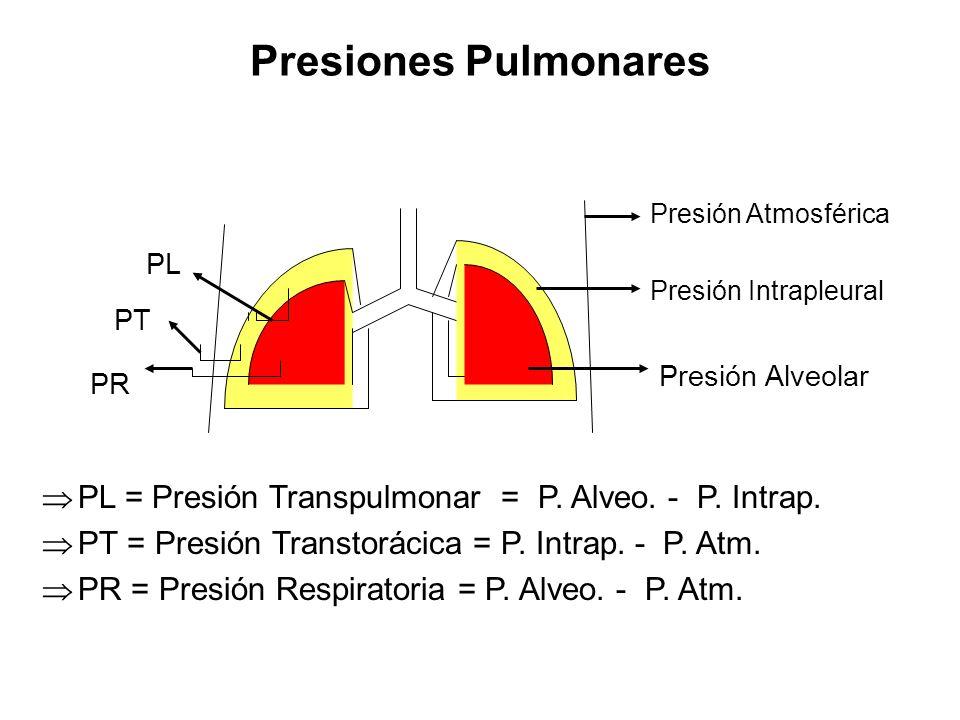 Presiones Pulmonares PL = Presión Transpulmonar = P. Alveo. - P. Intrap. PT = Presión Transtorácica = P. Intrap. - P. Atm.