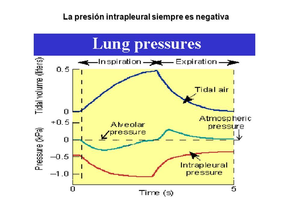 La presión intrapleural siempre es negativa