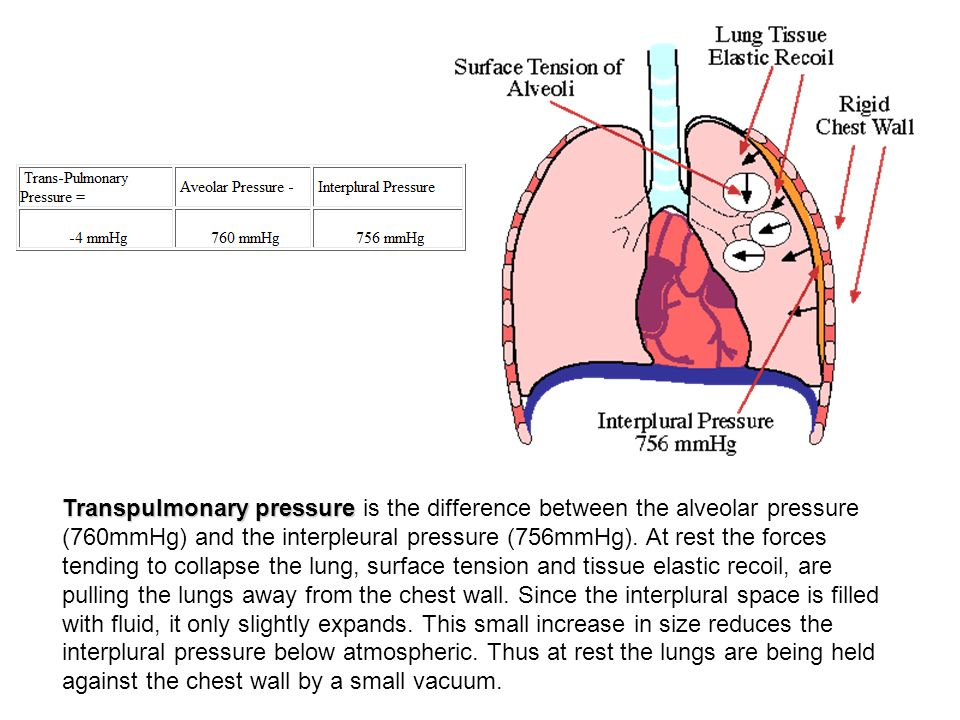 Transpulmonary pressure is the difference between the alveolar pressure (760mmHg) and the interpleural pressure (756mmHg).