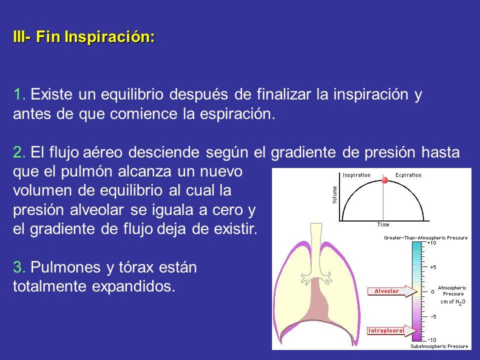 III- Fin Inspiración: 1. Existe un equilibrio después de finalizar la inspiración y antes de que comience la espiración.