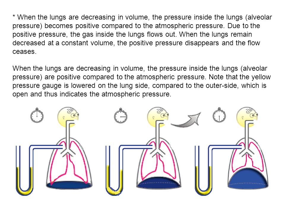 * When the lungs are decreasing in volume, the pressure inside the lungs (alveolar pressure) becomes positive compared to the atmospheric pressure. Due to the positive pressure, the gas inside the lungs flows out. When the lungs remain decreased at a constant volume, the positive pressure disappears and the flow ceases.