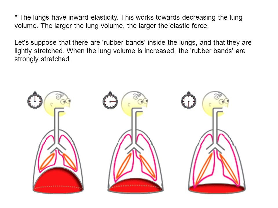 The lungs have inward elasticity