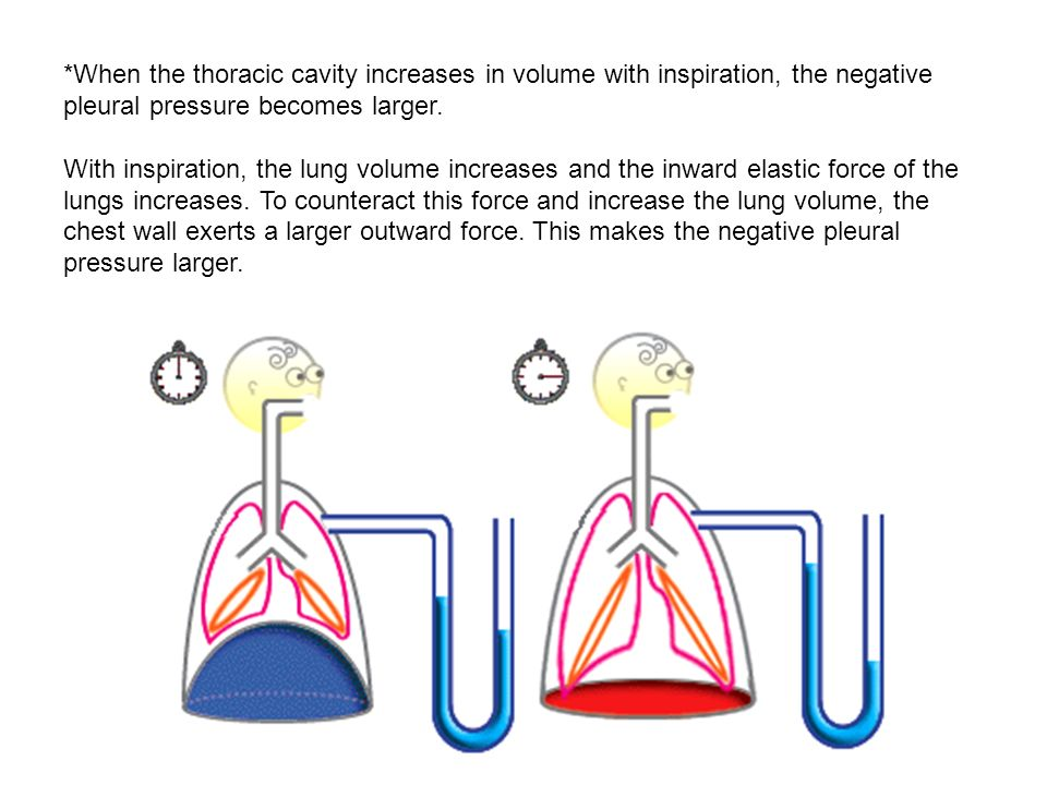 *When the thoracic cavity increases in volume with inspiration, the negative pleural pressure becomes larger.