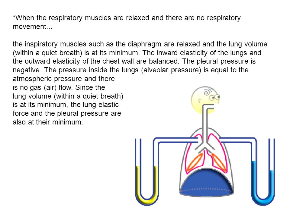 *When the respiratory muscles are relaxed and there are no respiratory movement...
