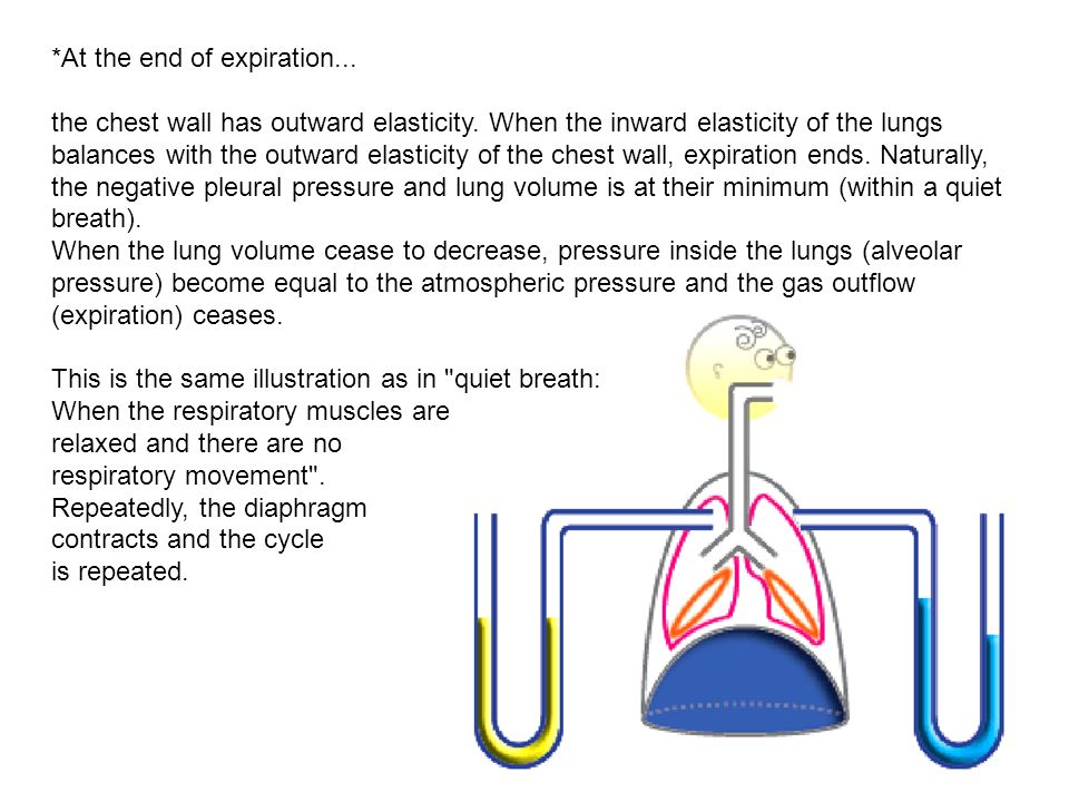 At the end of expiration. the chest wall has outward elasticity