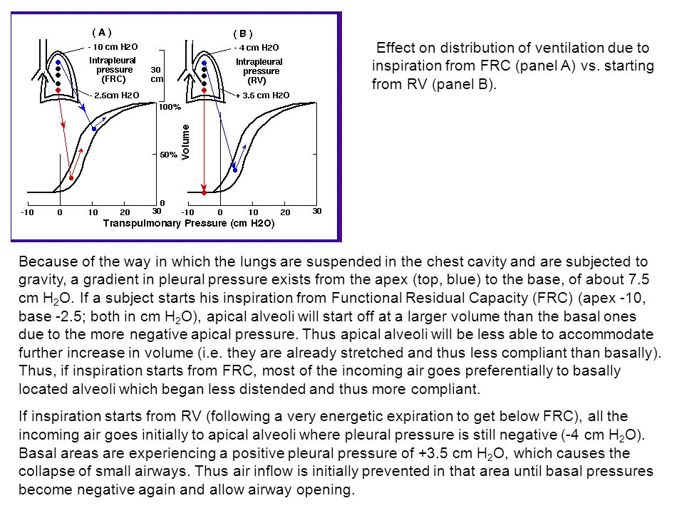 Effect on distribution of ventilation due to inspiration from FRC (panel A) vs. starting from RV (panel B).