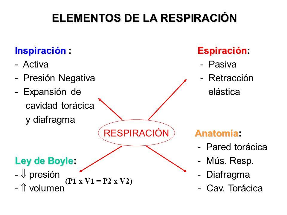 ELEMENTOS DE LA RESPIRACIÓN