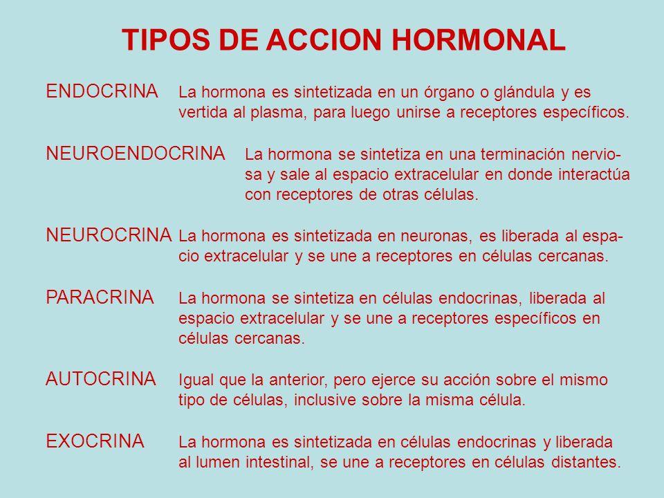 TIPOS DE ACCION HORMONAL