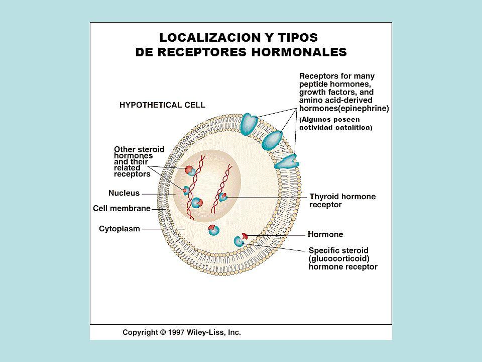 DE RECEPTORES HORMONALES