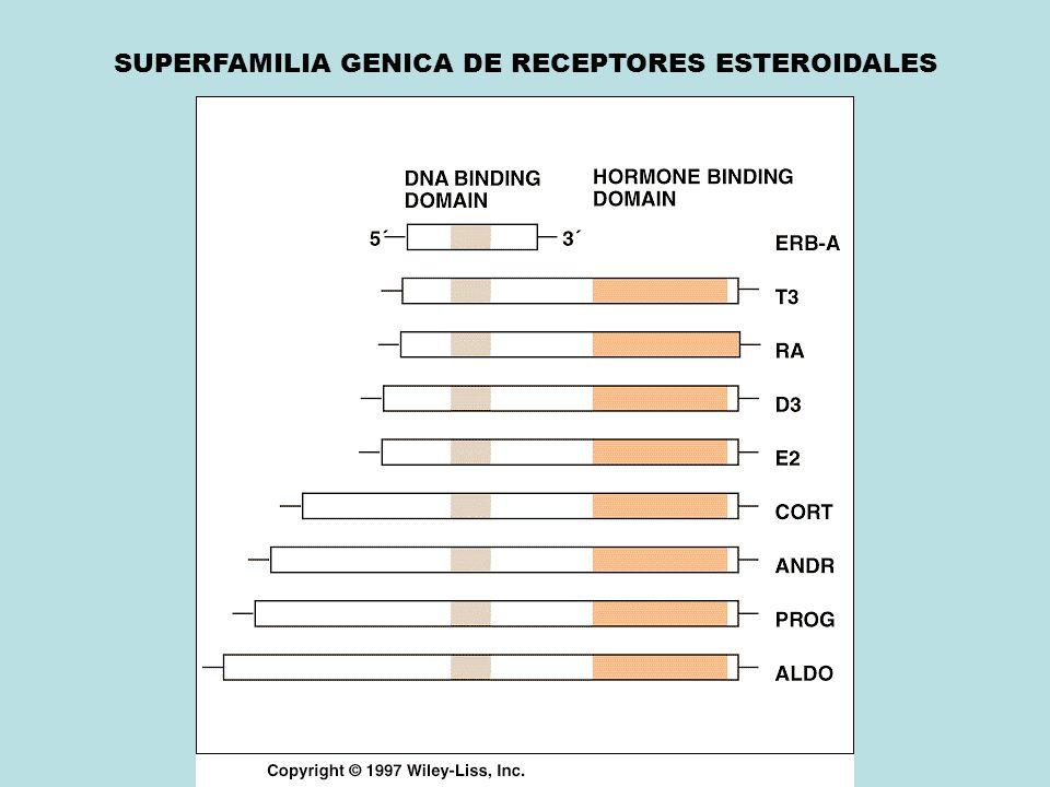 SUPERFAMILIA GENICA DE RECEPTORES ESTEROIDALES