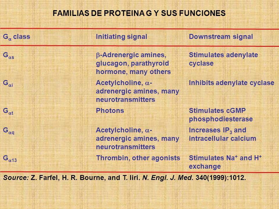 FAMILIAS DE PROTEINA G Y SUS FUNCIONES