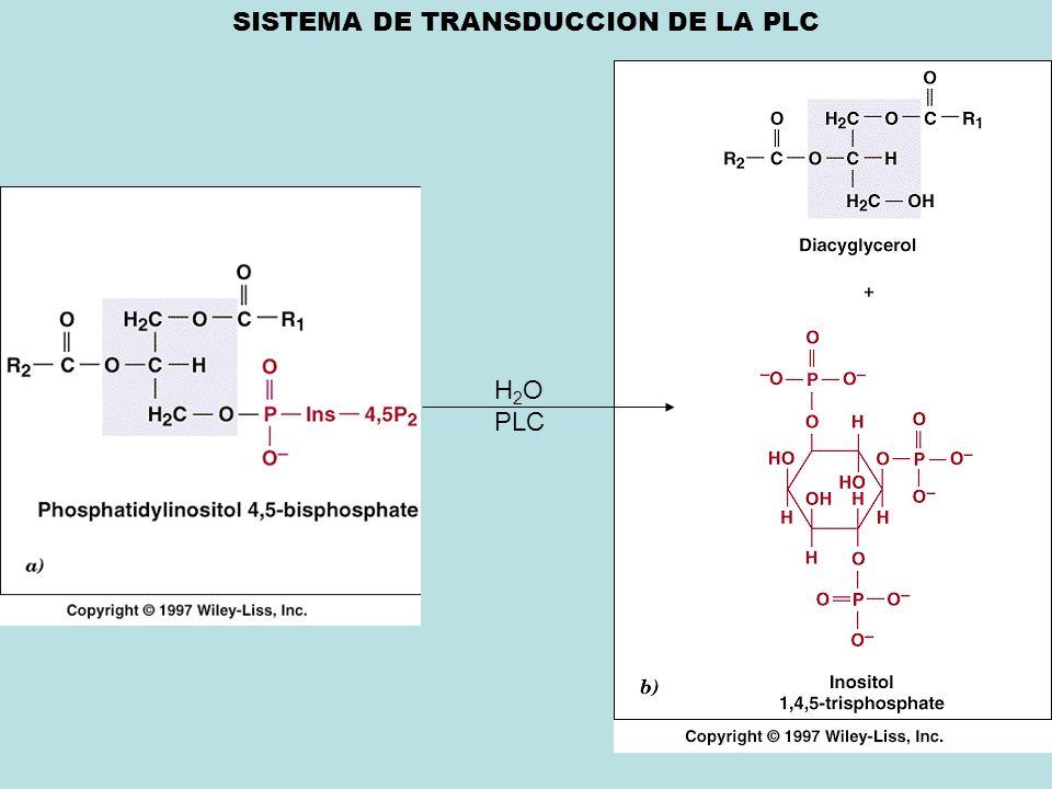 SISTEMA DE TRANSDUCCION DE LA PLC