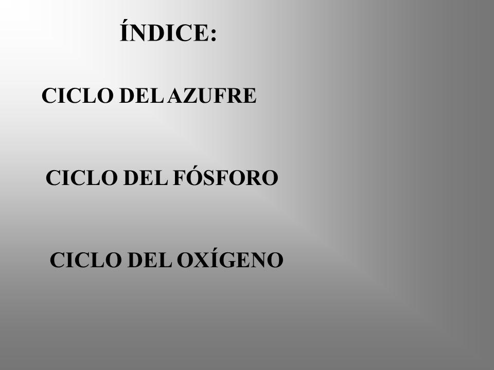 ÍNDICE: CICLO DEL AZUFRE CICLO DEL FÓSFORO CICLO DEL OXÍGENO